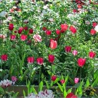 В Летнем саду :: Татьяна Осипова(Deni2048)