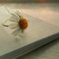 Просто прекрасный цветок :: Людмила Павлова
