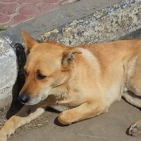 Пять минут из жизни бездомного пса... :: Наталья Владимировна