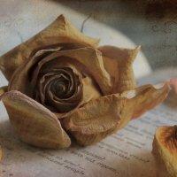 Увядшая роза :: Татьяна Панчешная