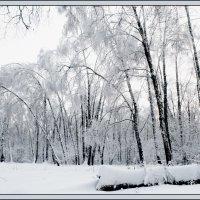 Ромашковский лес.... :: Юрий Яньков