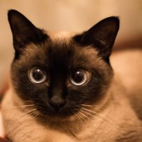 Кошка с большими глазами :: Valentina Zaytseva