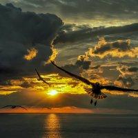 Огненная юбочка :: Александр Бойко