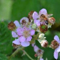 пчелка :: Sergej