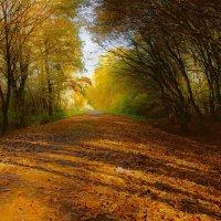Осень золотая :: Alexander Andronik