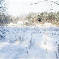 Зимний лес в Ромашково :: Юрий Яньков