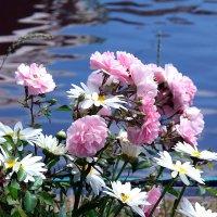 Цветы над водой! :: Наталья