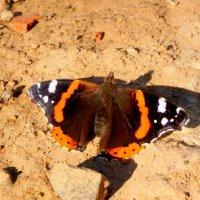 бабочки на земле 2 :: Александр Прокудин