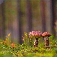 В осеннем лесу) :: Бурлов Андрей