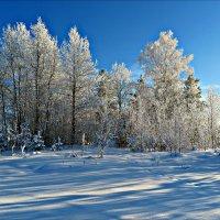 Зимой хорошо :: Leonid Rutov