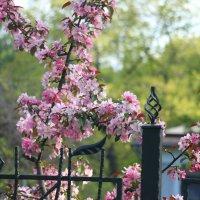 цветущее дерево :: Надежда Сальянова