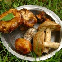 лесные грибочки :: Любовь Потравных