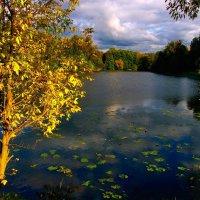 Манит нас Осень Красотою :: Vera Ostroumova