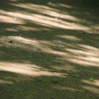 Парковые зебрушки.... :: Tatiana Markova