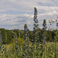 Летние травы :: Ольга Винницкая