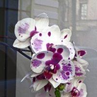 Бурное цветение :: Наталья Джикидзе (Берёзина)