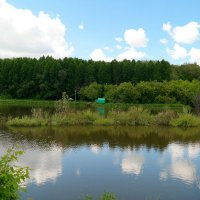 У пруда лесного :: Андрей Заломленков