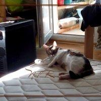 Кот и ремонт :: maxim