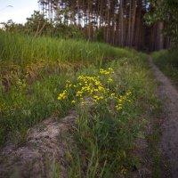 Дорожка в лес :: Юрий Клишин