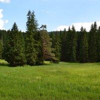 Альпийские луга :: Ольга
