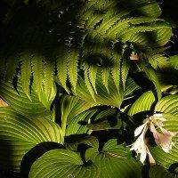 Может так и цветёт папоротник?... :: veilins veilins