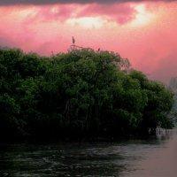 Мангровый остров :: Tanja Gerster