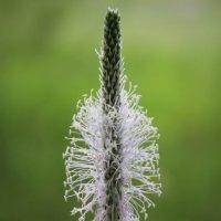 В цвете :: Анна Шишалова