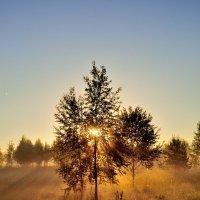 Солнечные лучики :: Сергей Цегельник