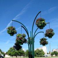 Городские цветы :: veera (veerra)