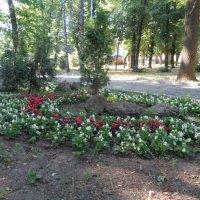 Сад камней Рёандзи... :: Алекс Аро Аро
