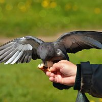 ну хоть так... :: linnud