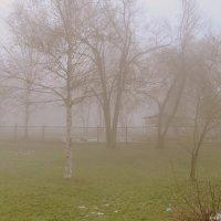 Осень. Туман. :: Марина Белоусова