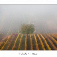 Foggy Tree :: Влад Соколовский