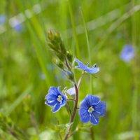 Цветок :: Ольга Осовская