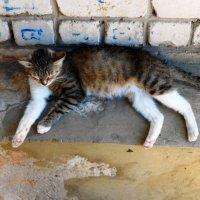 Не будите спящую кошку :: Сергей Уткин