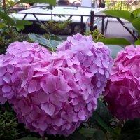 Сочинские цветы :: Антонина Владимировна