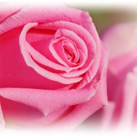 Розовый зефир :: Swetlana V