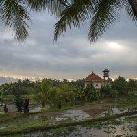 Балийская деревушка :: Марина Мудрова