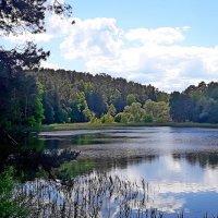 Большой (Верхний) Барвихинский пруд на речке Соминка :: Tata Wolf