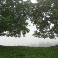 Туман. :: Olga Grushko