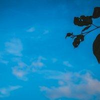 вечернее небо :: Ольга (Кошкотень) Медведева