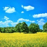 Яркое лето. :: Svetlana Sneg