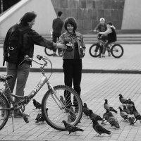 Про голубей :: Татьяна Панчешная