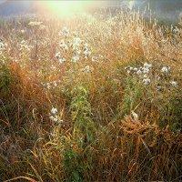Этюд про свет... деревенское утро... :: Александр Никитинский