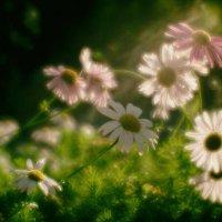 Про тёплый денёк :: Андрей Селиванов