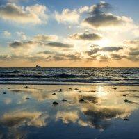 Наплыв медуз в Израиле :: Eddy Eduardo