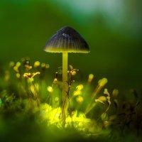 Волшебство леса :: Алексей Строганов