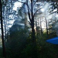 Вечернее солнце в лесу :: Михаил Новожилов