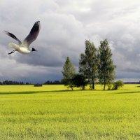 Чайка в поле :: Фёдор Волков
