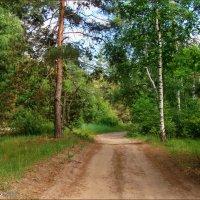 Широкая дорожка в лесу :: °•●Елена●•° Аникина♀